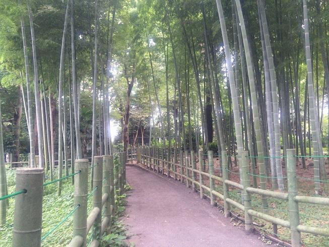 竹林ロード①