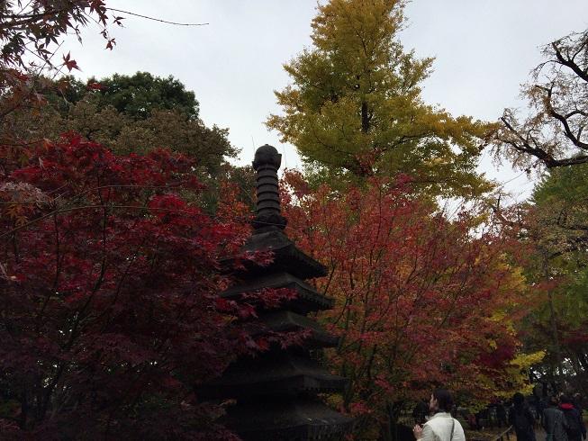 紅葉の美しい浄真寺のもみじ