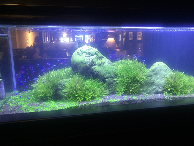 熱帯魚がいる水槽
