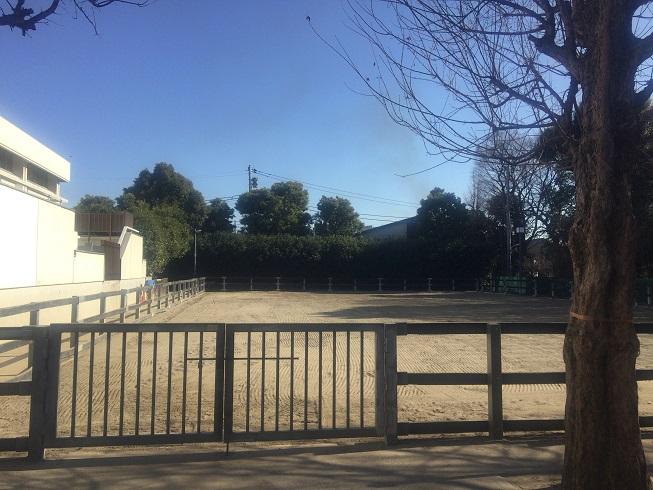 馬の放し飼い出来る敷地