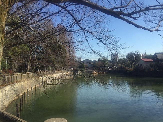 碑文谷公園園内の池