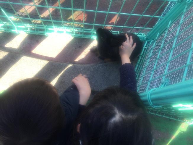 うさぎに触る6歳長女