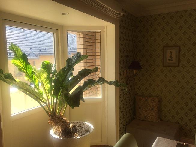 部屋にある観葉植物
