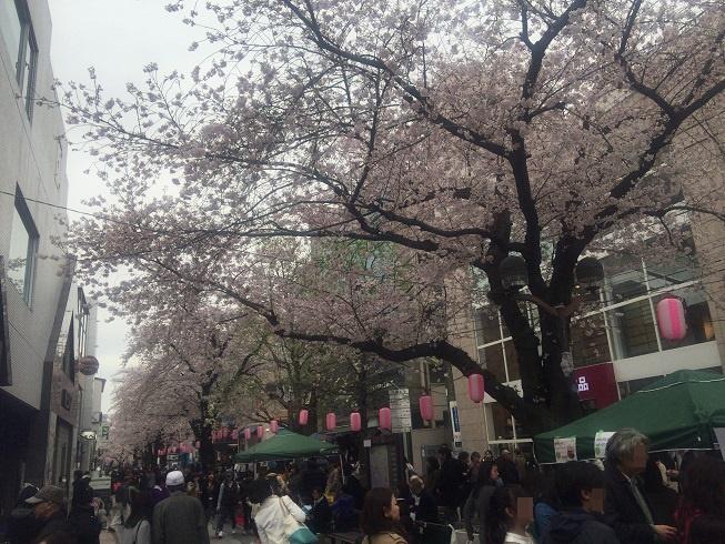 マリクレール通り緑道の満開の桜