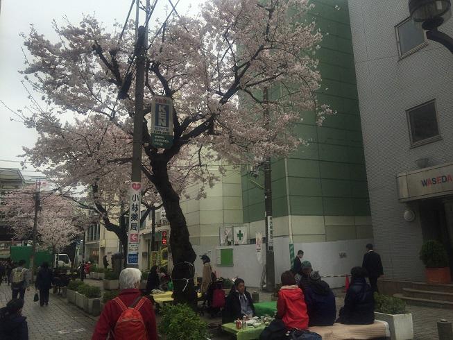自由が丘の緑道に咲く桜の木