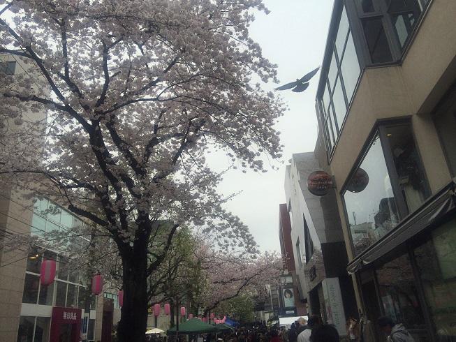 J・Sカフェ前の桜
